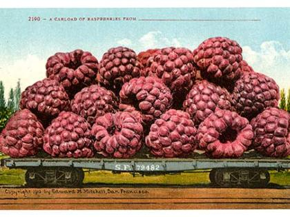 A Carload of Raspberries, postcard, ca. 1910, Edward H. Mitchell Collection